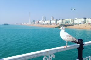 Seagull on Brighton Pier for BrightonSEO